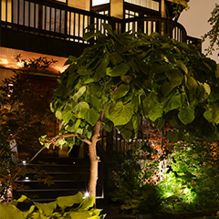 How To: Landscape Accent Lighting