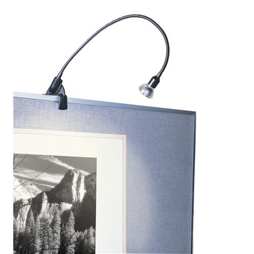 DL-214 Low Voltage Gooseneck Display Light by WAC Lighting | DL-214-BK
