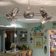 Dagny Ceiling Fan -  /